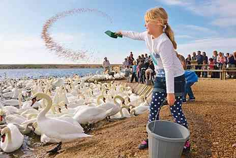 Abbotsbury Childrens Farm - Swannery and Subtropical Gardens: Child, Adult or Family Ticket - Save 43%