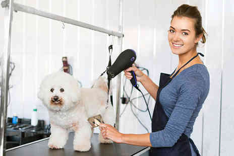 E Careers - Online dog grooming course - Save 92%
