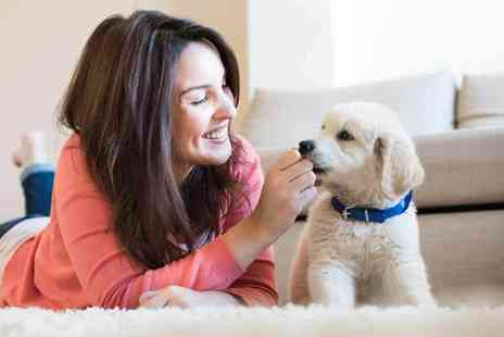 Swapaw - 12 month subscription to a dog sitting service - Save 76%