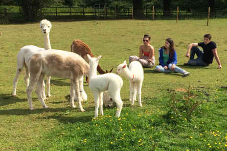 Lucky Tails Alpacas - 90 minute meet the alpacas trek and farm entry for a child or adult ticket - Save 60%