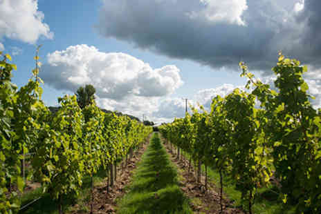 Aldwick Court Farm - Vineyard Tour and Tasting for Two - Save 0%