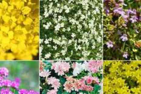Garden Best Buys - Selection of six Perennial Rockery Plants - Save 61%
