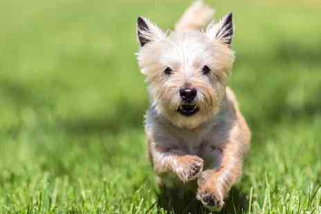 Doggy Lodge Day Care - Dog Grooming for Small, Medium or Large Dog - Save 0%