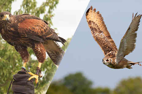 CJs Birds of Prey - Two Hour Birds of Prey Experience For One or Two - Save 0%