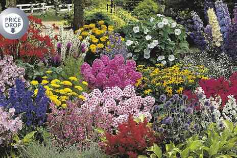 Van Meuwen - Ten XL British Grown Perennial Border Plants With Free Delivery - Save 0%