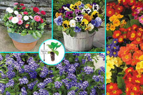 Dobies of Devon - 135 Autumn bedding plants - Save 52%
