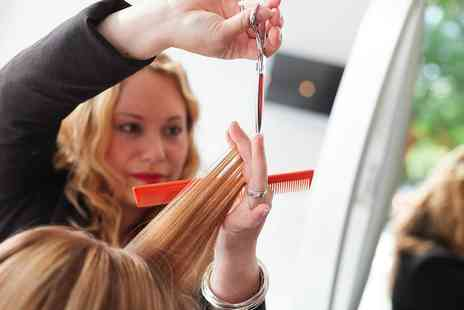 Hair Organics - Permanent Colour and T Section with Haircut and Blow Dry - Save 0%