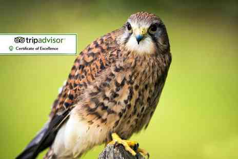 York Bird Of Prey Centre - Enjoy a day out with entry for up to five at York Bird of Prey Centre - Save 50%