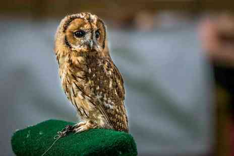 CJ S Birds of Prey - Two hour birds of prey experience or owl encounter for one - Save 77%
