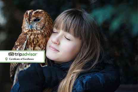 Bridlington Birds of Prey & Animal Park - 30 minute owl handling experience for one person - Save 50%
