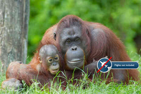 Inspired Escapes - Seven or 14 night all inclusive orangutan Wildlife Rescue Centre experience - Save 20%