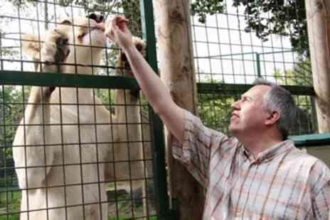 Paradise Wildlife Park - Feed the White Lions for One on any Weekday - Save 0%