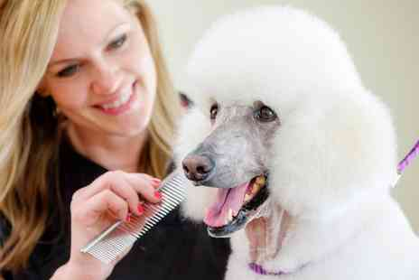 Dog Beauty - Grooming Service for Small, Medium and Large Dogs - Save 0%
