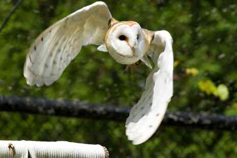 Birds of Prey Centre - Three Hour Ultimate Eagle or Owl Experience for One or Two - Save 68%