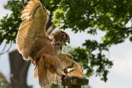 Birds of Prey Centre - Two Hour Falconry Experience for One or Two - Save 62%