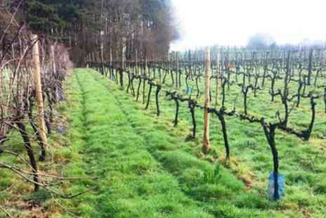 Sedlescombe Organic Vineyard - Vineyard Tour with Lunch and Wine Tasting for Two - Save 41%