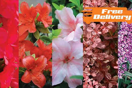 Jersey Plants Direct - Six Lucky Dip Garden Shrubs With Free Delivery - Save 0%