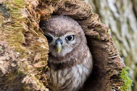 Shropshire Falconary - 90 minute owl experience for one or Two - Save 71%