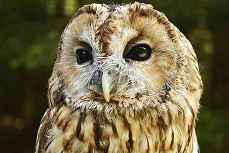 Falconry Days - Two Hour Owl Encounter Experience for One - Save 61%