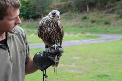 North East Falconry - Hawk Experience for Up to Four - Save 0%