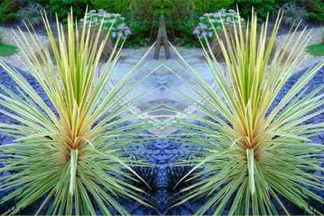 Gardening Express - Two Exotic Variegated Palms  for Cordyline Torbay Dazzler With Free Delivery - Save 50%
