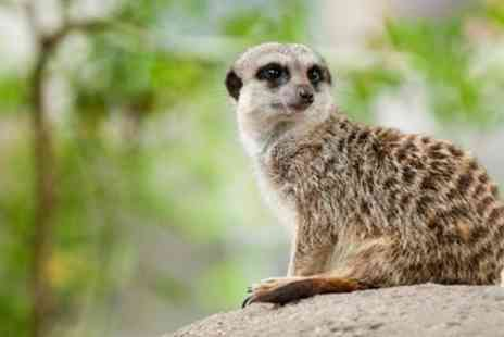 Bridlington Birds of Prey & Animal Park - Meerkat Experience - Save 53%