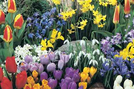 Van Meuwen - 100 or 200 Bumper Spring Flowering Bulb Collection With Free Delivery - Save 0%