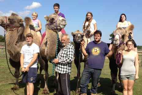 Oasis Camel Centre - Camel Safari with Refreshments and Optional Meerkat Encounter for Two or Four - Save 21%
