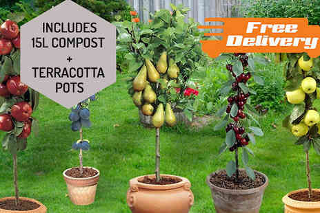 Jersey Plants Direct - Two Piece Patio Fruit Tree Bundle With Planters and 15L Compost Include Free Delivery - Save 0%