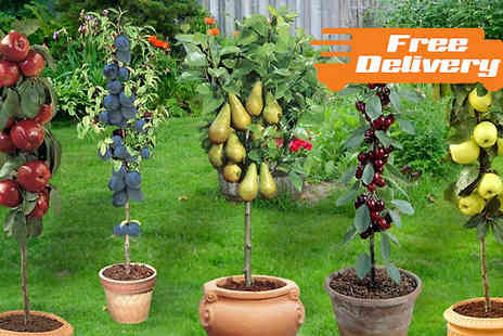 Jersey Plants Direct - Two Patio Fruit Trees With Free Delivery - Save 20%
