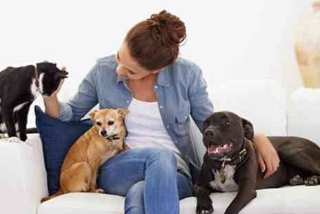Online City Training - Level 2 Pet Nutrition, Psychology or Both Online Training - Save 91%