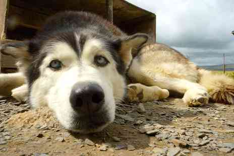 Horse and Husky - Two night Lake District break for two with husky sledding and breakfast - Save 41%