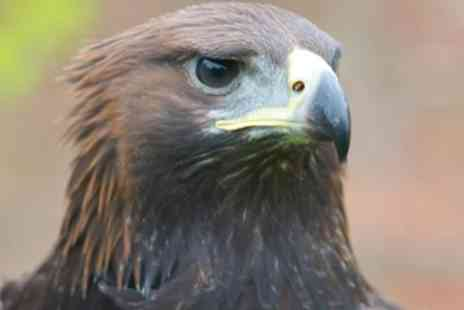 York Bird of Prey - York Bird of Prey Centre Entry For Two, Four or Five - Save 50%