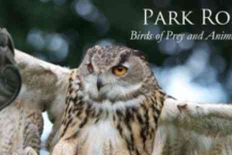 Park Rose Birds - Half Day of Hands-On Falconry - Save 63%