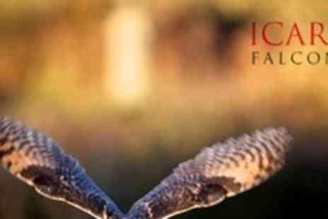 Icarus Falconry - Owls at Dusk Experience Including Flying Display For Two - Save 60%