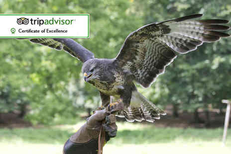 Stockley Birds of Prey - One hour hawk walk birds of prey experience for one or two - Save 62%
