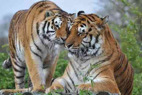 Buyagift - Tea with the Tigers and park entry to Paradise Wildlife Park for two - Save 0%
