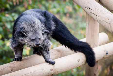 Wills Wild Animal Encounters - One hour binturong experience for two - Save 74%