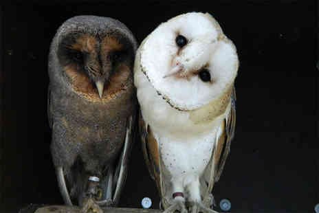 Kirkleatham Owl Centre - Festive twilight owl experience for two people - Save 51%