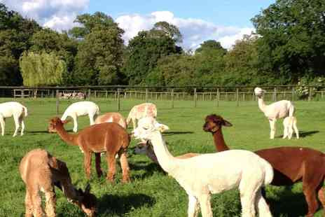 Pennybridge Farm - Two hour alpaca experience for two - Save 50%