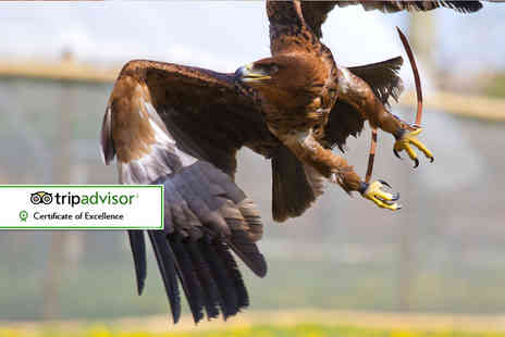 Millets Farm Falconry Centre - Two hour falconry experience for one or two or half day experience for one or two - Save 67%