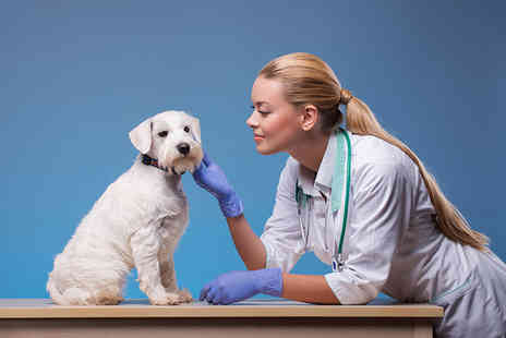 Harley Oxford - Online introduction to veterinary nursing - Save 92%