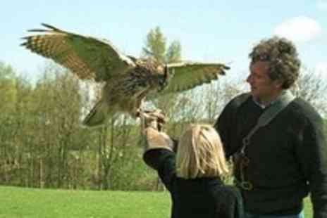 Lakeland Bird of Prey Centre - Lakeland Bird of Prey Centre Admission For Two - Save 0%