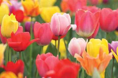Van Meuwen - Lucky Dip Flowering Bulbs With Free Delivery - Save 0%