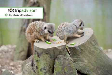 Bridlington Birds of Prey & Animal Park - Meet the meerkat experience for two people - Save 0%