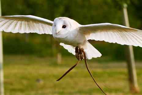 S & D Falconry - Half Day Birds of Prey Experience - Save 76%