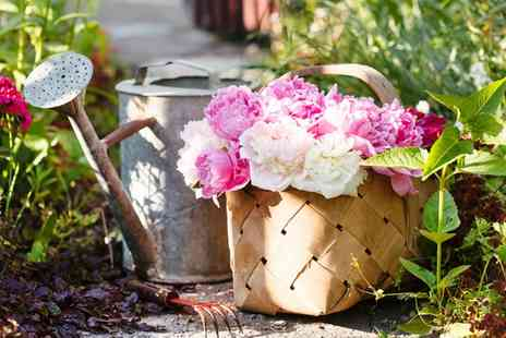 Van Meuwen - Peony Edens Plants With Free Delivery - Save 0%