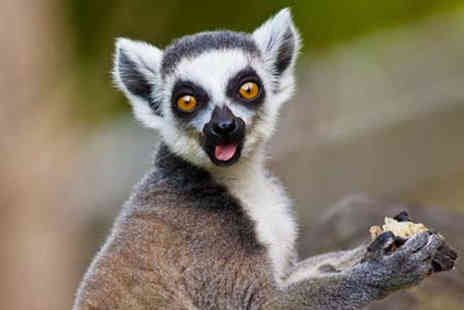 Activity Superstore - Two tickets to a Meet the Lemurs experience - Save 45%