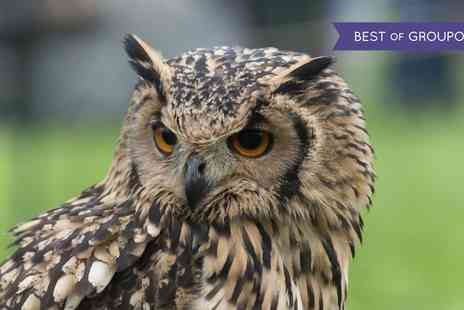 Hawks Of Steele - Meerkats and Owls Experience for Two or Four - Save 62%