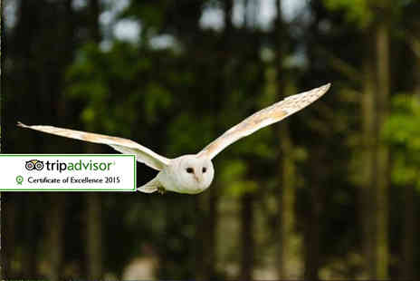 Kirkleatham Owl Centre - 2½ hour owl experience for one with access - Save 53%